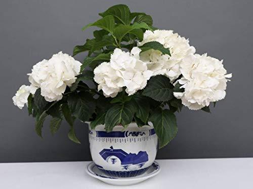 Yajutang Maceta de porcelana china con paisaje de 40 cm de diámetro, color azul y blanco