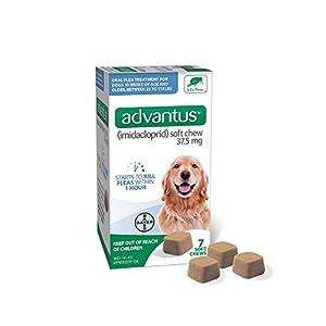 Advantus (Imidacloprid) 7-Count Large Dog Flea Chewable Treatment, for Dogs 23-110 Pounds