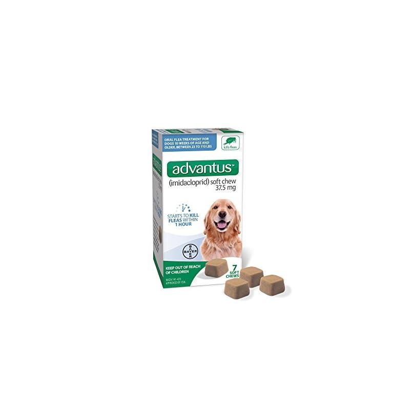 dog supplies online advantus (imidacloprid) 7-count large dog flea chewable treatment, for dogs 23-110 pounds