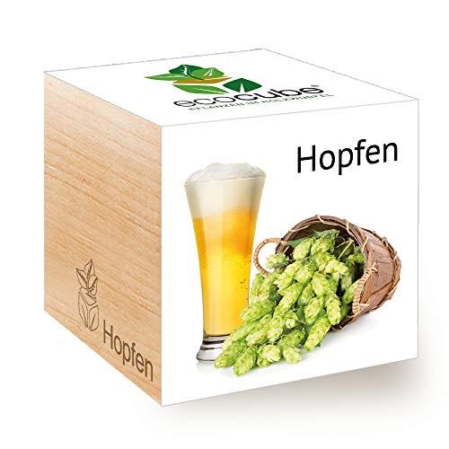 Feel Green Ecocube Hopfen, Nachhaltige Geschenkidee (100{c5bc3f4dfb5acad7857e4c2445b82db11d566d7e1d83a149f9ba56d1d712fb7a} Eco Friendly), Grow Your Own Craft Beer/Anzuchtset, Pflanzen Im Holzwürfel, Made in Austria