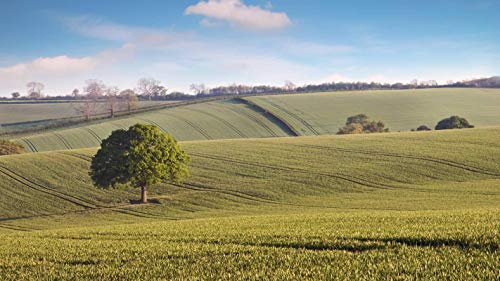 lxlwxh541 Diamant Malerei 5D Landscape Tree The Field Home Wand Decor 40X50Cm Round Geschenk