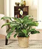 Classic Sympathy - Same Day Sympathy Flowers Delivery - Sympathy Flower - Sympathy Gifts - Send Online Sympathy Plants & Flowers
