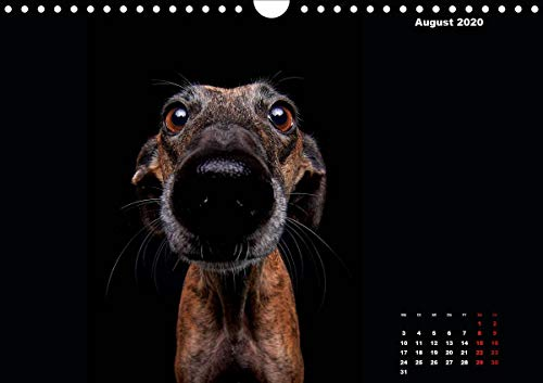 『Gier, M: Stimme der Windhunde (Wandkalender 2020 DIN A4 quer』の9枚目の画像