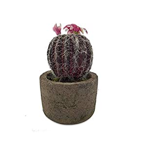 Silk Flower Arrangements Small Artificial Simulation Pink Flower Prickly Pear Potted Plant, Plastic Succulent Bonsai, Indoor and Outdoor Decoration, 10X16cm