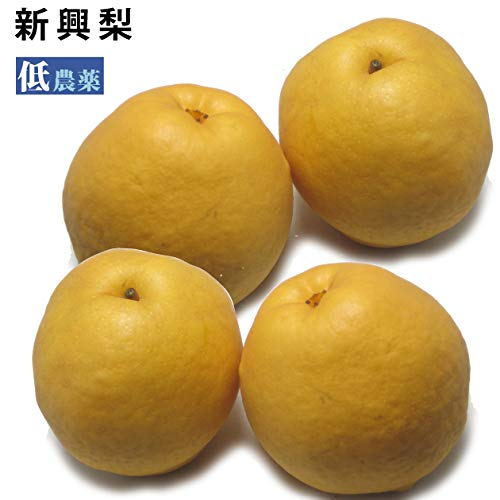【新興梨4個】新潟県産低農薬栽培!【送料込】