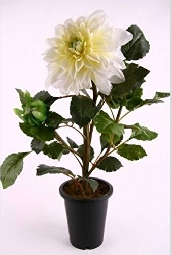 Shophaus24 Kunstpflanze Dahlien Pflanze im Topf. Künstliche Dahlie Creme getopft. Höhe 61 cm.