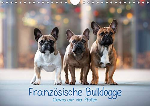 Französische Bulldogge - Clowns auf vier Pfoten (Wandkalender 2020 DIN A4 quer): Monatskalender, Die Clowns unter den Hunden (Monatskalender, 14 Seiten ) (CALVENDO Tiere)