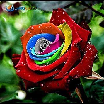 200 Seeds Rare Holland Rainbow Rose Flower Lover Multi-color Plants Home Garden Rare Rainbow Rose Flower Seeds