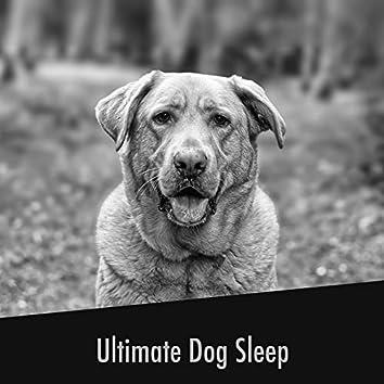 Ultimate Dog Sleep