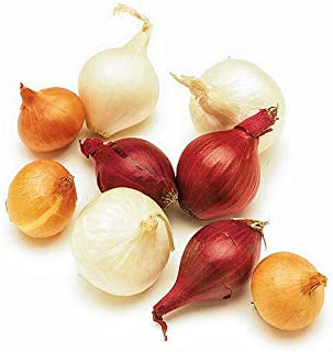 Kejora Fresh Pearl Onions Combination ( Yellow, White and Red ) 3 x 10 oz ( 1 pack per color)
