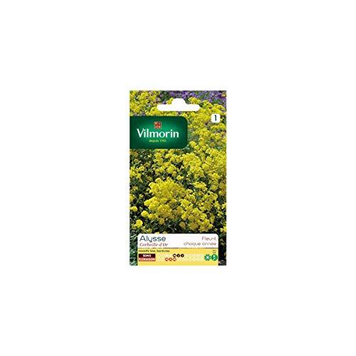 Vilmorin - Sachet graines Alysse Corbeille d'or