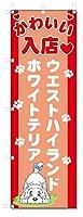 のぼり旗 ウエストハイランドホワイトテリア (W600×H1800)DOG、犬、ペットショップ