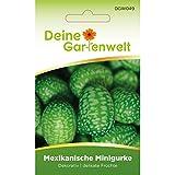 Mexikanische Minigurke | Samen für kleine Gurken | Gurkensamen | Snackgurken | Salatgurken