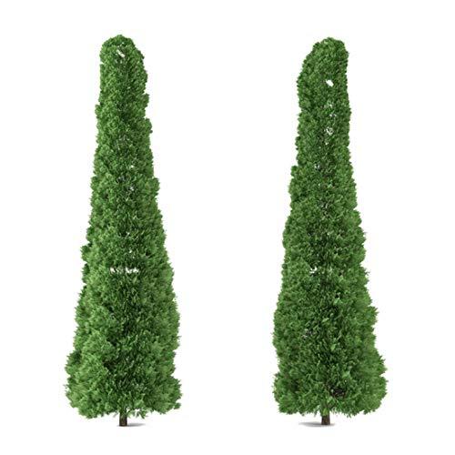 Riesen Lebensbaum - 200 Samen - Thuja plicata - Western Red Cedar