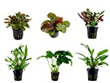 Tropica Mitte Set mit 6 Topf Pflanzen Aquariumpflanzenset Nr.22 Wasserpflanzen Aquarium Aquariumpflanzen
