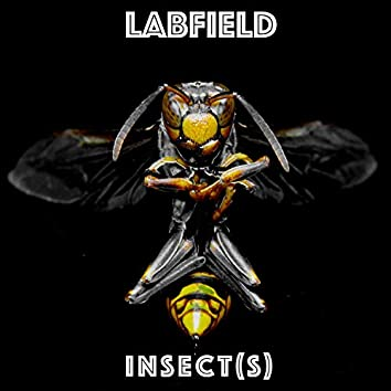 Insect(s)