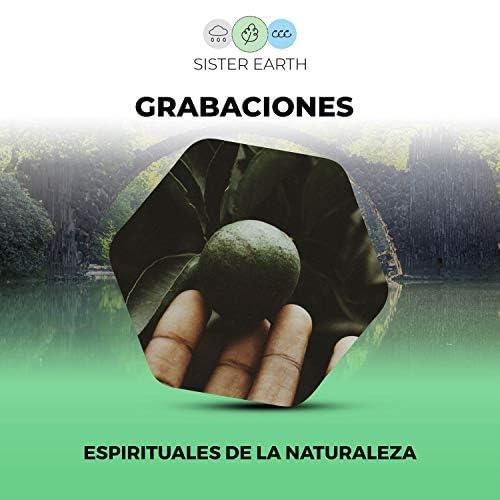Sonido Del Bosque y Naturaleza