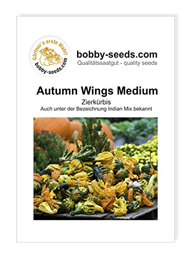Autumn Wing M Zierkürbis von Bobby-Seeds Portion