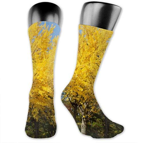 JONINOT 2 paquetes de calcetines deportivos ligeros y cómodos de 40CM, novedad, divertidas y hermosas medias de otoño Ginkgo medio largas