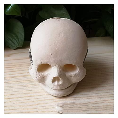 YQQQQ Modelo Educativo Modelo de Cabeza de cráneo Infantil - Modelo de cráneo fetal anatómico médico para Estudio Modelo médico (Color : White, Size : 8CM)