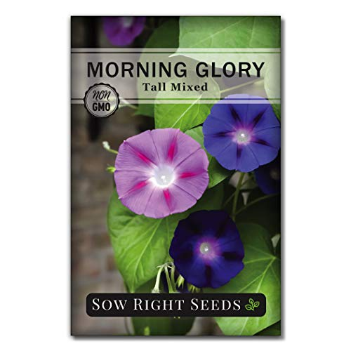 Sow Right Seeds Morning Glory Seeds - Full Instructions for Planting, Beautiful to Plant in Your Flower Garden; Non-GMO Heirloom Seeds; Wonderful Gardening Gifts (1)
