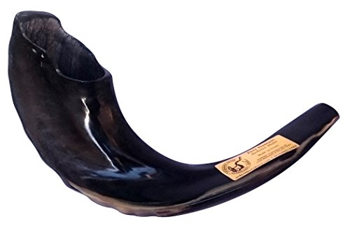 ajudaica 38,1cm koscher schwarz Rams Horn poliert Schofar Made in Israel + kostenloser Anti-Geruch-Spray