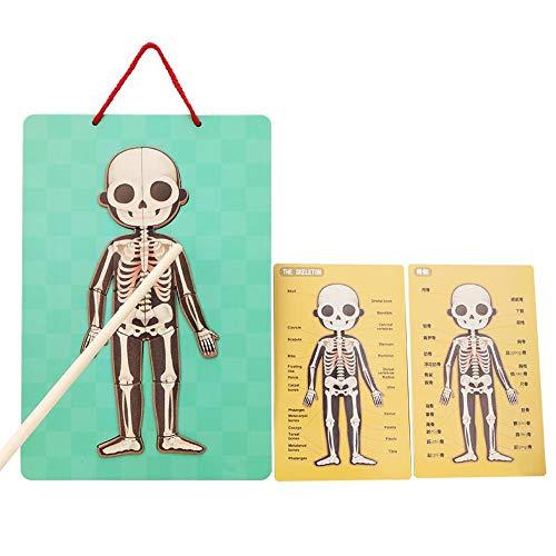 Pinsofy Bildungsspielzeug, Papiermaterial Magnetismus Design Natürliches Frühpädagogisches Spielzeug, für Kinder im Frühpädagogik