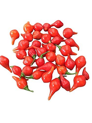 Biquinho Vermelho Chili 10 Samen -Wunderschön und Mild-