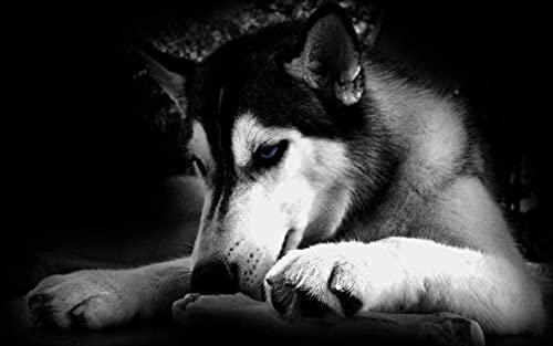HJHJHJ Rompecabezas de Papel de 2000 Piezas, decoración Familiar de Husky Siberiano,...
