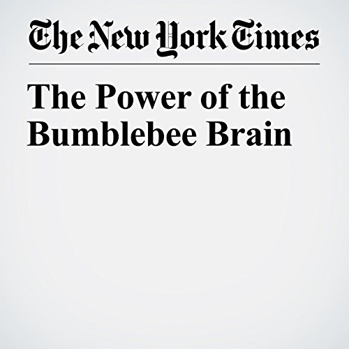 The Power of the Bumblebee Brain copertina