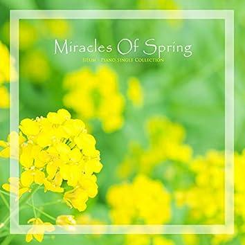 봄의 기적