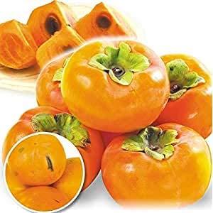 国華園 食品 和歌山産 大特価 ご家庭用 富有柿 7.5kg 1箱