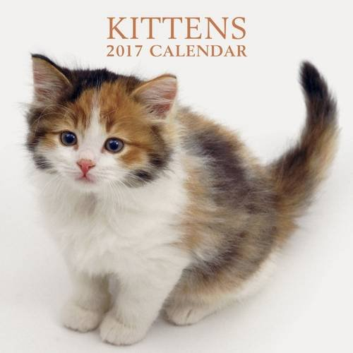 2017 Calendar: Kittens