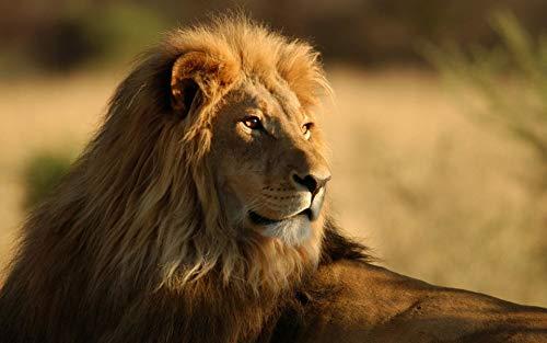 Puzzle 1000 piezas Regalo de arte de león animal en...