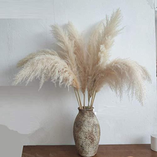 Qianyun Pampasgras im 6er Set XL 120cm beige natürlich getrocknet und extra flauschig - Plant Wedding Flower Bunch for Home Decorations vom Hochzeitstrend zum Interior-Liebling