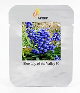 Rare 'Blue Flower Goddess' Lily of the valley Convallaria majalis Perennial Flower Seeds, Professional Pack, 50 Seeds / Pack