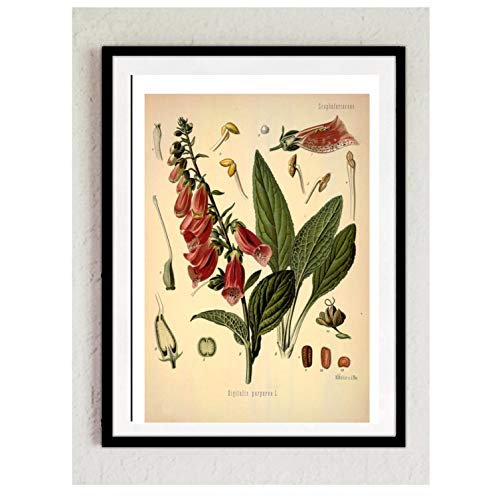Print Wandbild Poster Bild Wanddeko Digitalis Fingerhut Pflanze Blätter Nr. 7 grün ohne Rahmen oder Aufhängung