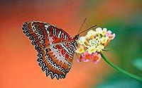 Bcbfgfdgbz クロスステッチキット刺繍キット DIY 手作り - 14CT プレプリント刺繡工芸品のフルレンジを初心者向けマルチカラーパターンスターターキット室内装飾40×50cm動物の蝶
