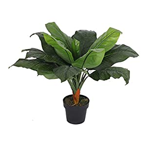 Leaf LEAF-7062 Stunning Artificial Plants/Trees, Dark Banana, 80cm
