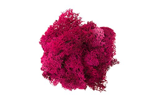 Reindeer Moss (Erica) Dark Pink for Tillandsia Airplant Flower Arranging House Decoration