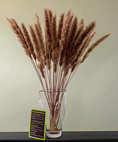 felani® Pampasgras getrocknet - 15 Stück in braun I natürlich & besonders fluffig - echte Trockenblumen Wedel - Wohnzimmer Deko - Phragmites Communis