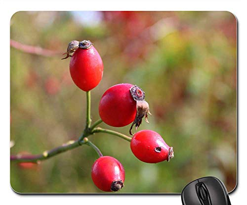 Mouse Pad - Wild Rose Rose Hips Autumn Vitamin C Plant Nature
