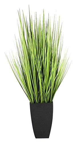 Greenbrokers Limited Coffret aogb-5306–36 20,3 x 20,3 x 99 cm Herbe d'oignon Noir Pot – (1)
