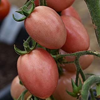 Thai Pink Pear Tomato Seeds (20 Seed Pack)