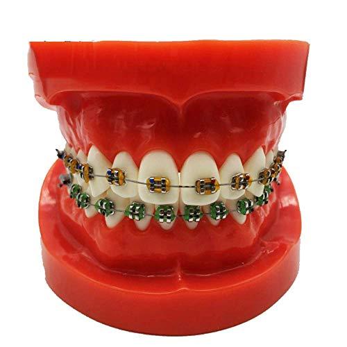 LBYLYH Plantilla de ortodoncia - Dientes Enseñanza Modelo TENICIÓN ROJA Estándar con alicates Face Face Cara Modelo Dental Estudio Dental Modelo de enseñanza