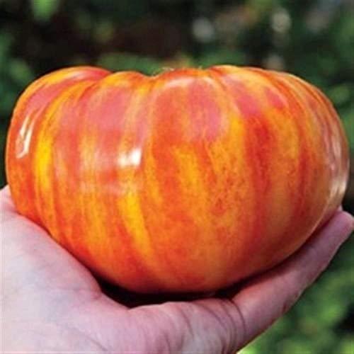 Portal Cool 10 Semi/Samen: 10 Semi Pomodoro