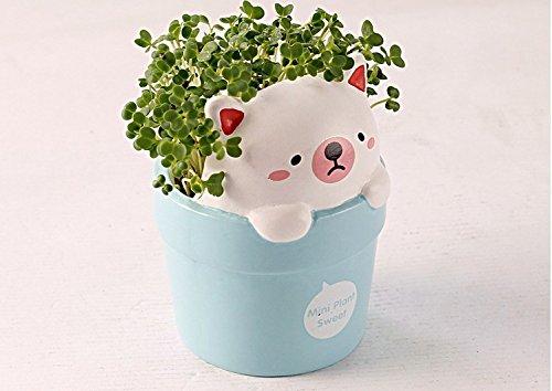 bonsaï MINI Intéressant pot de fleur en céramique avec des graines mini-bureau deocration 4 couleurs pour le choix