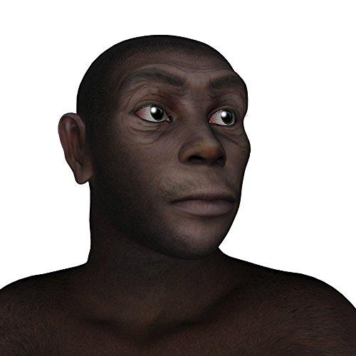 nachbildung homo erectus schädel