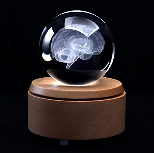 XINDAM 3D Human Brain Anatomical Model Paperweight(Laser Etched) in Crystal Glass Ball Science Gift (Included LED Base)
