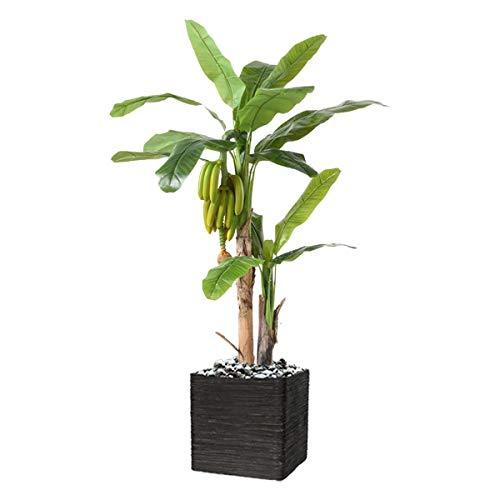 Artificielles.com – Bananero artificial 2 troncos en maceta (altura 180 cm x profundidad 130 cm) con plátanos